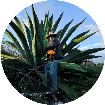 Vive a Través del Maguey  - Agave Turismo